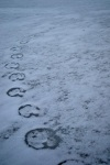 Tracks on Ice 1, ©Anna Hergert 2012