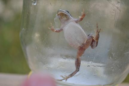 Frog 1 ©Anna Hergert 2012