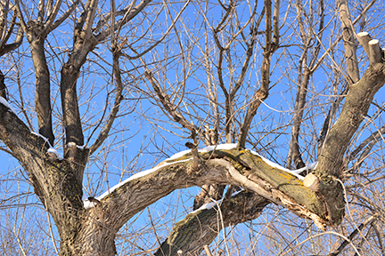 What a difference a few days make - after blowing snow and zero visibility Wednesday and Thursday we are rewarded with bright blue sky - a great contrast to snow dusted branches.