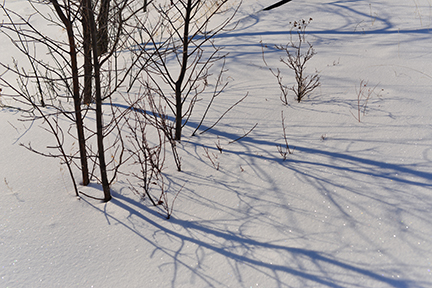 Shadows from small trees lead the eye across the snow.