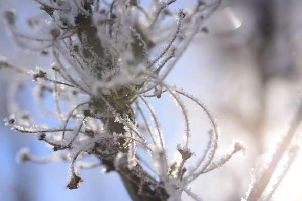 Hoarfrost - Natures Design
