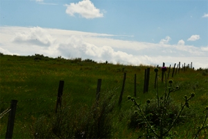 A ride into the hill on hay bales brought us closer to nature. A fence along the path lead the eye into the distance.