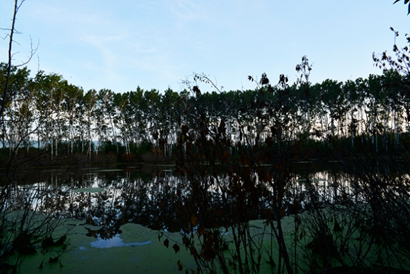 The pond at early morning light - a tranquil place to visit at any time of the day, provided you wear insect repellent.