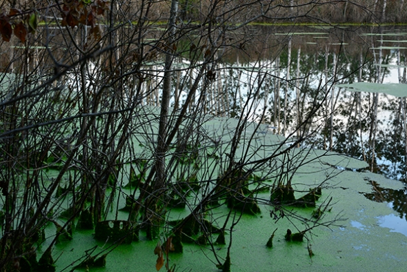 A close up of the pond's shore, a little soupy but full of color and texture... great inspiration.