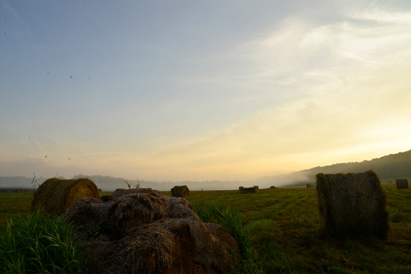 I reach the meadow that reminds me of a 19th century landscape painting despite the large round bales. The mist is illuminated by the rising sun lending an air of mystery.