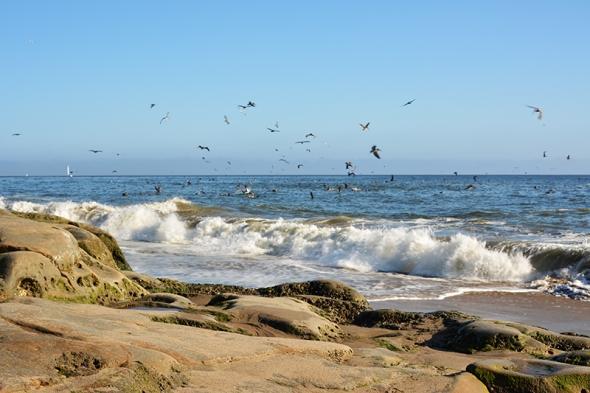 Santa Cruz Beach 1