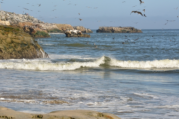 Santa Cruz Beach 2
