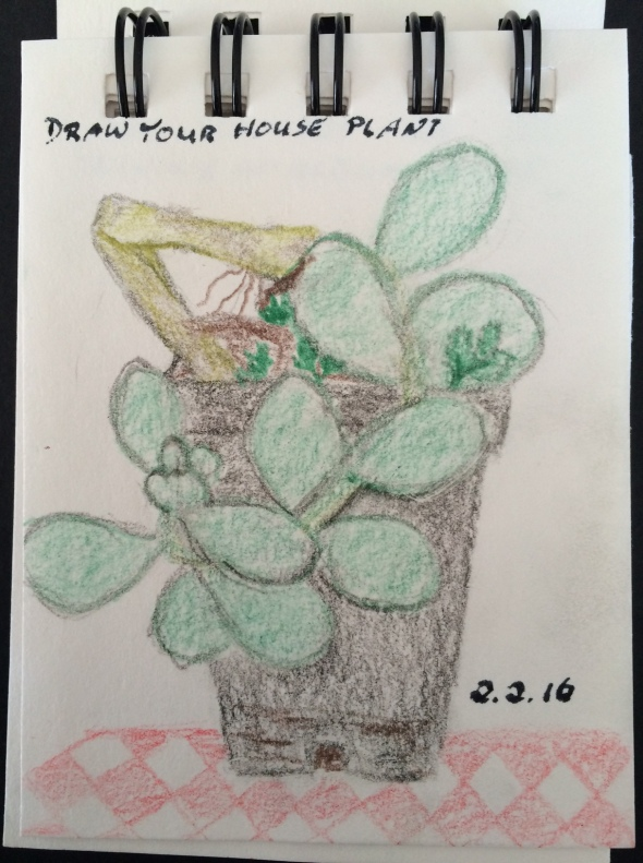 On Day Two we were asked to draw a house plant. I chose a small succulent.